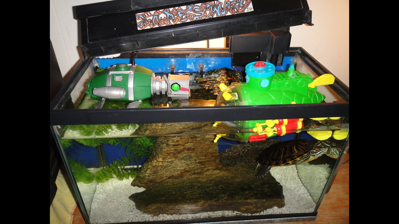 Client Aquariums together with Watch together with Watch as well TropheopsChilumba also Fish Tank Decorations For Oscars Go Back Gallery For Oscar Fish Tank. on oscar in 55 gallon tank