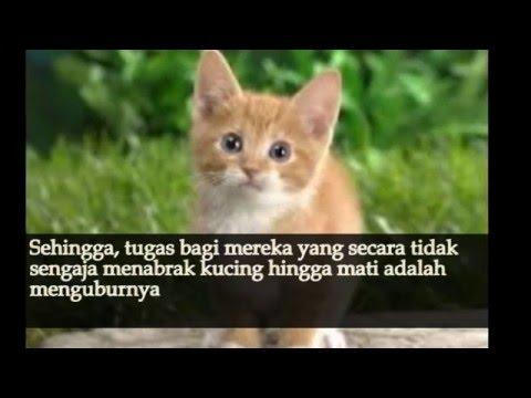 Hukum Menabrak Kucing Dalam Islam - YouTube