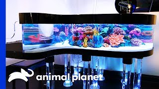 This Unique Tank Is The Size Of A Grand Piano! | Tanked