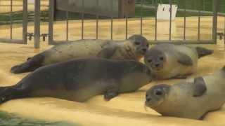 Besuch auf der Seehundstation Norddeich 2013