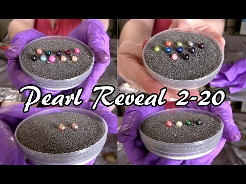 Pearl Reveal 2-20-18! Quads & Triplets Galore! Beautiful Mounted Pearl Jewelry Too! Live Pearl Party