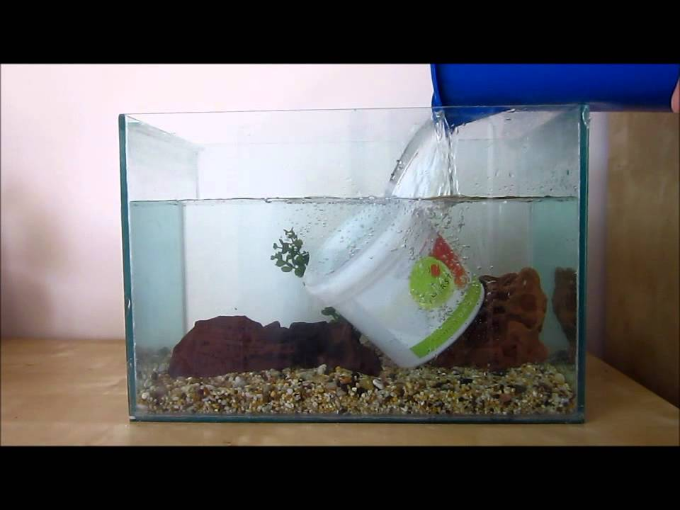 How to set up a basic betta tank youtube for Easy aquarium fish