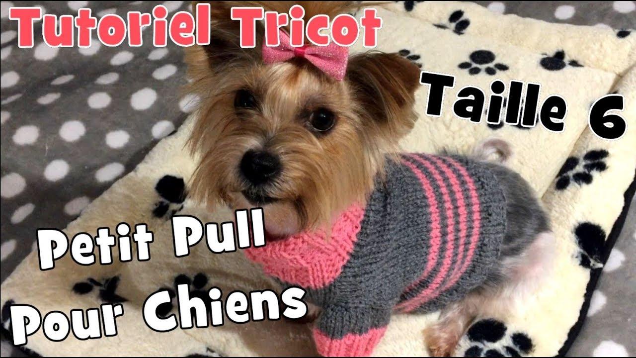 Diy Tricot Petit Pull Pour Chiens De 32 Kg à 4 Kg Taille 6