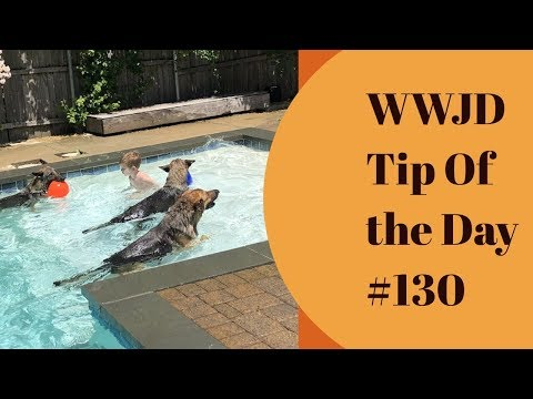 stop-doing-so-much-with-your-dog,-what-would-jeff-do?-dog-training-tip-of-the-day-#130