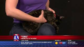 TORIE - Fox 13 Best Friend from the Humane Society of Utah
