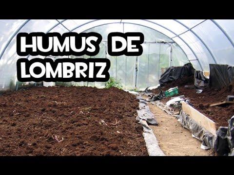 Humus De Lombriz Aprende A Aplicarlo Con éxito