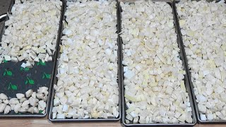 Freeze Dried Cajun Holy Trinity Part 2 Raw Onions Ep131