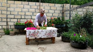 Flowers for Winter Supply-Tea, Country Life Vlog