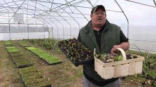 Veggies grow year-around at Brookdale Fruit Farm in Hollis