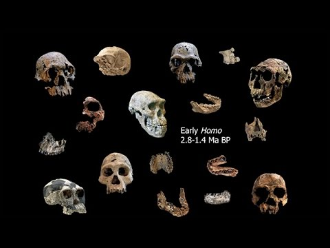 Origins of Genus Homo–Southern Africa and  Origin of Homo; Adaptive Shifts; Energetics and  Ecology