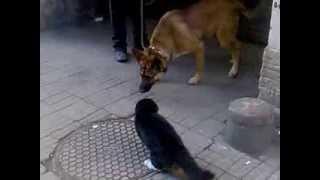 Кот возле обменника на Лиговке