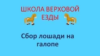 Сбор лошади на галопе