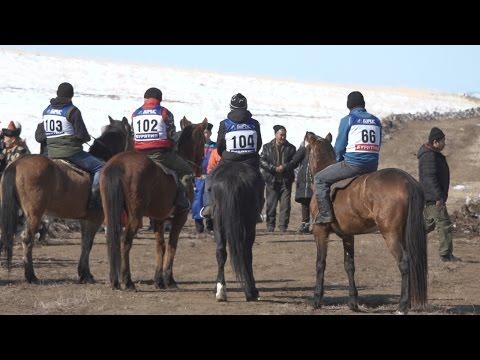 Традиционные конные скачки лошадей бурятской породы