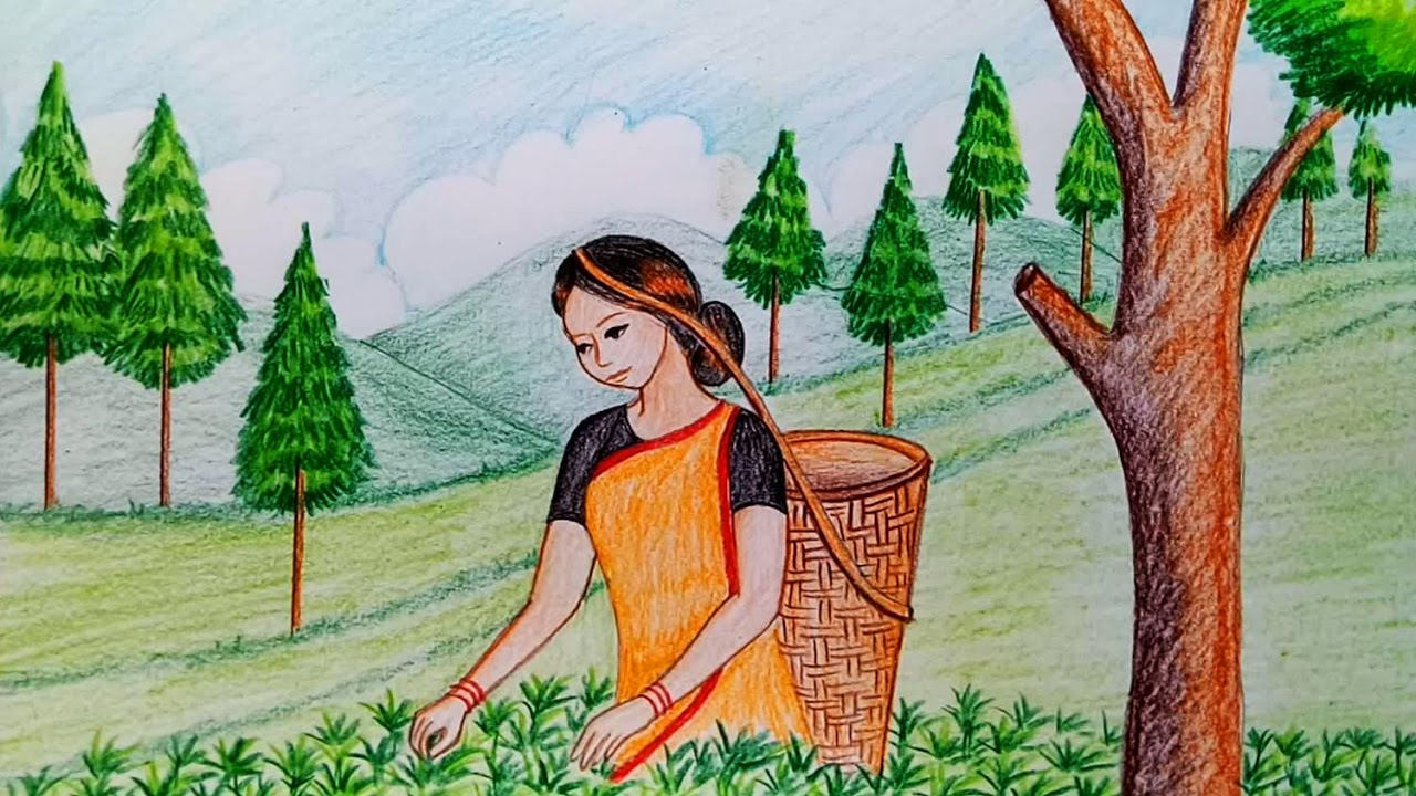 How to draw scenery of tea garden step by step - YouTube