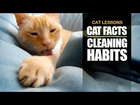 cat veterinary clinic