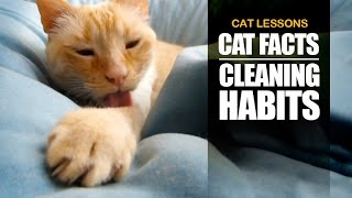 5 Reasons why Cats are so Clean
