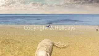 🐶☀️🐶Dog friendly beach at Heacham - book a caravan on our fantastic website www.2cholidays.co.uk