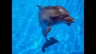 Говорят, дельфины говорят