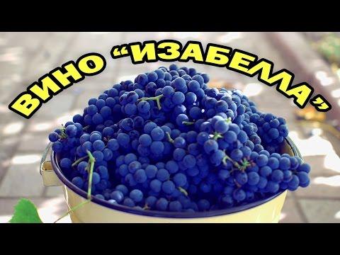 Як робити домашнє вино з винограду Ізабелла: готування