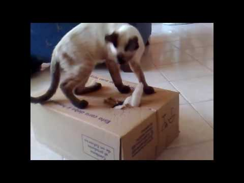 FuNNY CATS VIDEO FANNY CATS ANIMAL 2017 FANNY CATS COMPILATION