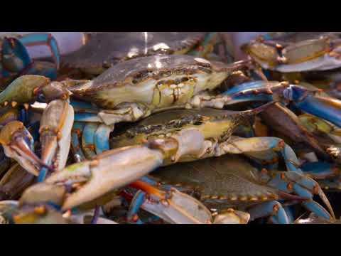 Ocean Acidification: A Big Threat to Marine Ecosystems | USGS | Alaska