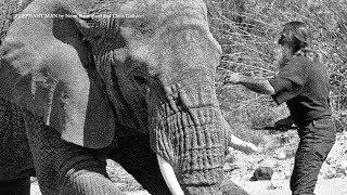 Как сварщик стал лучшим другом слонов | ДЕТАЛИ