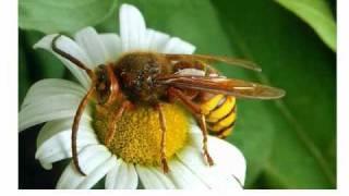 Животные насекомые 1 мухи кузнечики