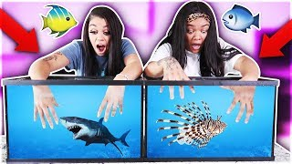 Download WHAT'S IN THE BOX CHALLENGE - UNDERWATER EDITION OCEAN ANIMALS!! Mp3 and Videos