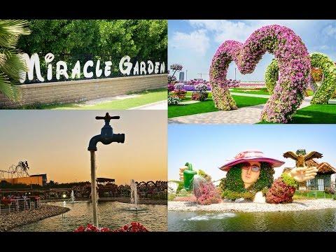 Dubai Miracle Garden Tour & Review 2017 Day & Night + Info