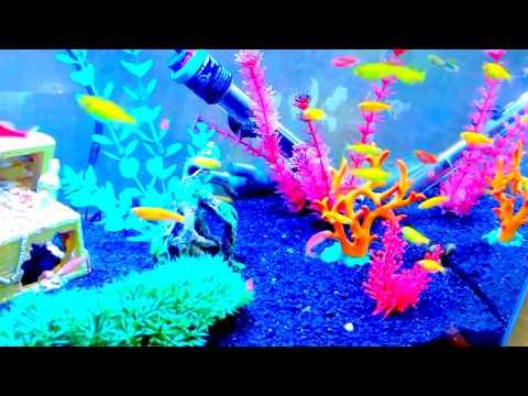 { 4K } Aquarium - Glo Fish, Glowing Fish, Danio Glo-fish ( Slow mo Version )
