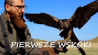 Sokolnictwo Podstawy - Wskoki na rękawice