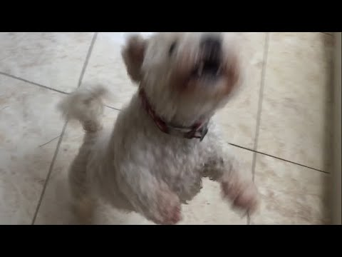 HOW Can a Dog DO THIS?  Crazy Dog Tricks!