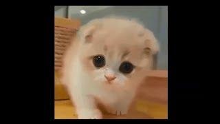 【爆笑間違いなし】おもしろ動物ハプニング集 Vol.97【猫好きは必見!!...