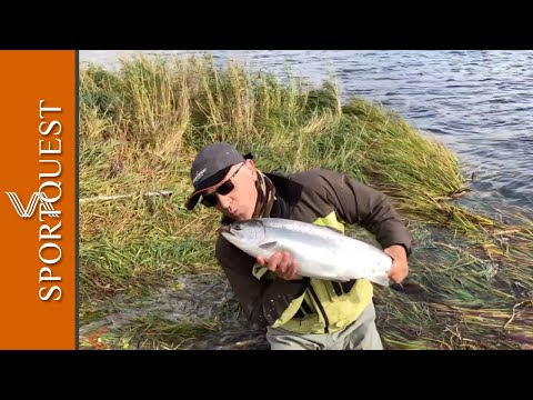 Catching Double Figure Salmon On The Single Handed Mackenxie NX1 5# Rod On The Goodnews River.