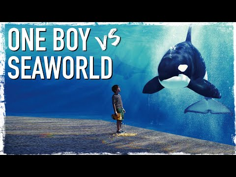 One 12 Year Old Boy Versus SeaWorld & Circuses