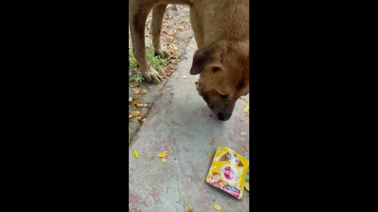 Download Dog rescued W huge maggot wound in mouth