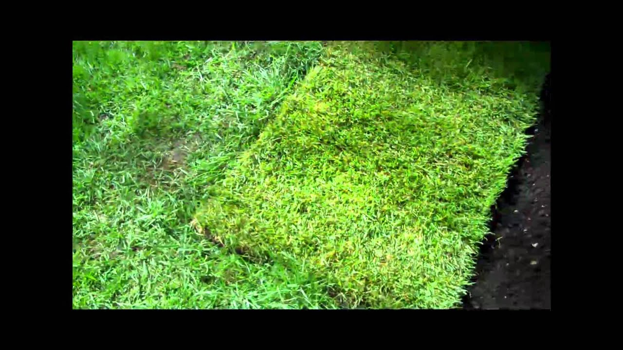 garden design garden design with tips for laying sod how to put