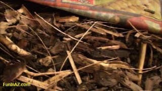 How to make a Roly Poly Farm - Using Armadillidium Vulgare for composting