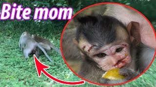 Why Don't Pity baby monkey? - Please stop, Pity baby monkey, TM #346