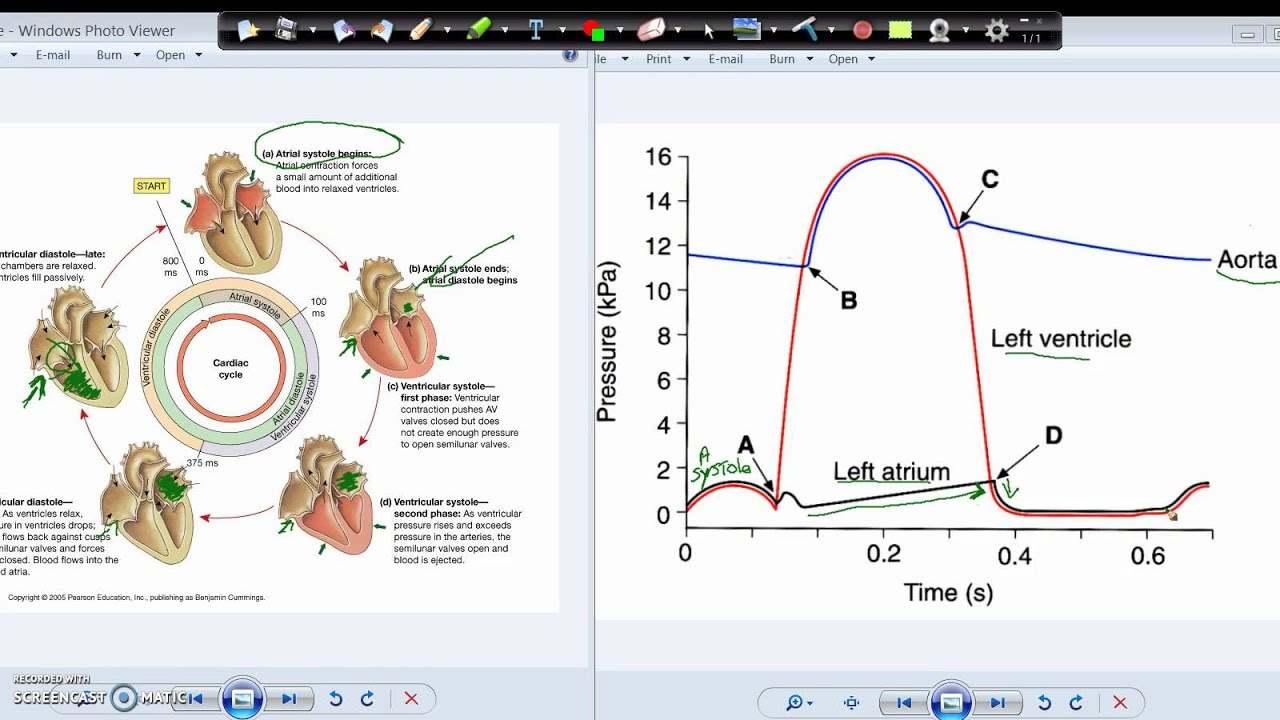 Wiggers diagram and the cardiac cycle youtube wiggers diagram and the cardiac cycle ccuart Gallery