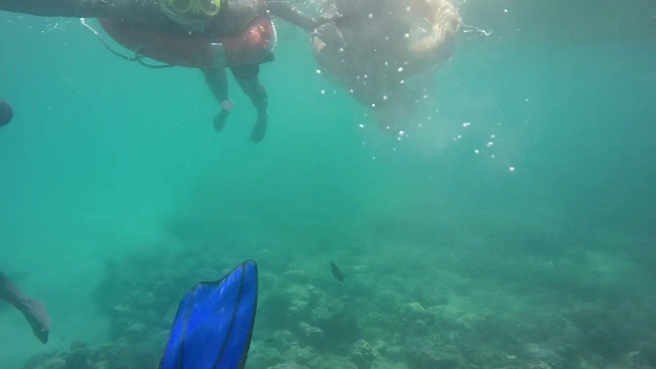 Sea life.. underwater found real mermaid.