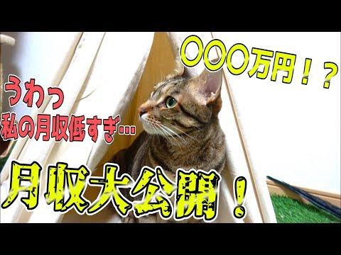 猫たちの月収を大発表します!その額まさかの〇〇〇万円!?