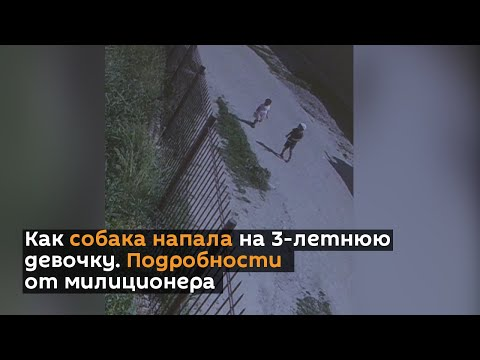 Как собака напала на 3-летнюю девочку — видео, подробности от милиционера
