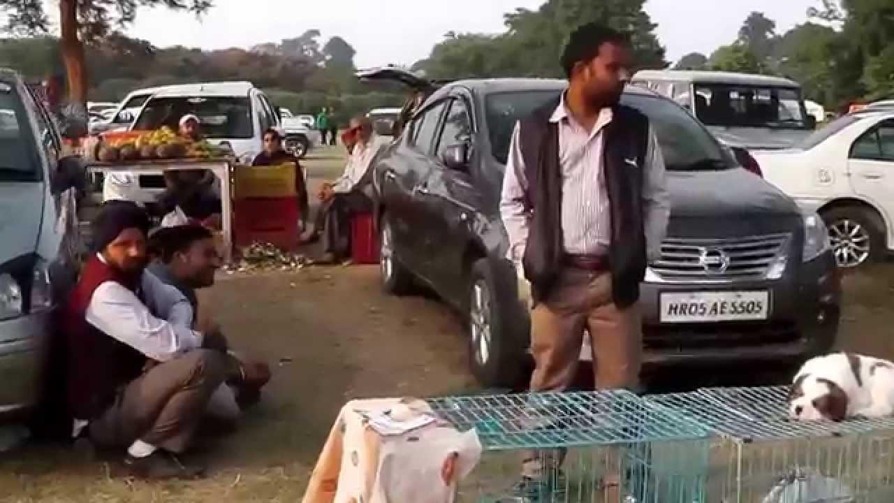 Ludhiana Dog Show