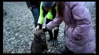 Зара - собака которую предали, ч1.