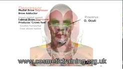 hqdefault - Facial Muscles Treatments Acne Botox