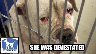 BETTY - The saddest dog in the shelter gets the happiest ending!