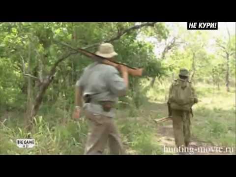 Африканский слон. Охота на слона в Танзании