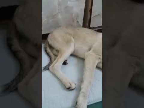 помощь животным инвалидам ПРИЮТ ДАЙ ЛАПУ ДРУГ.ЗА