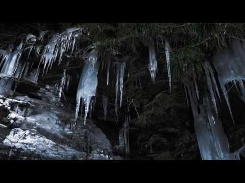 Chimonanthus praecox and Icicles in Chichibu,Saitama 秩父 長瀞の蝋梅と三十槌の氷柱 (Film look)